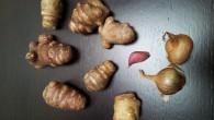 Il piatto di oggi ha come ingrediente principale il topinambur. Cos'è? Il topinambur è un tubero, ma a differenza della patata ha pochissime calorie, molta inulina, una sostanza simile all'amido […]